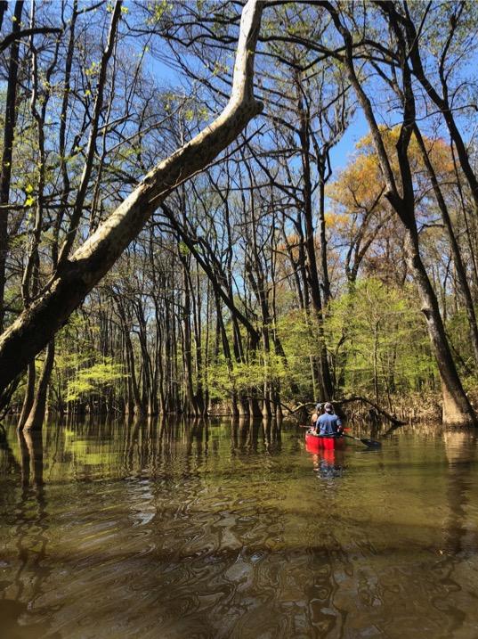 Canoeing through beautiful Congaree National Park