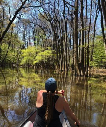 Congaree National Park: An Unexpected Treasure on the East Coast